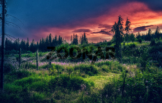 Beautiful landscape, forest meadow full of flowers.