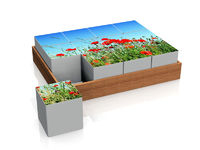 cubes  with poppies
