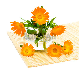 marigold flowers close up