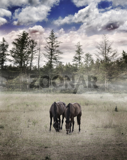 Langscape With Horses