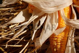 Mais auf Stroh