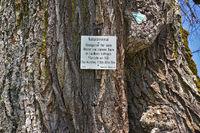 Allenspacher limetree natural monument on the Swabian Alb,