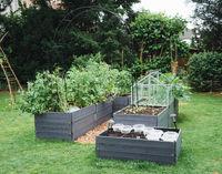 Raised beds in the garden