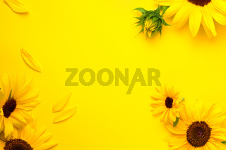 Sunflowers Composition On Bright Yellow Paper Background
