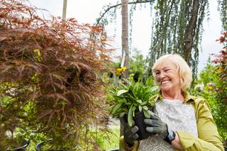 Gärtnerin mit Blume zum Umtopfen in der Gärtnerei
