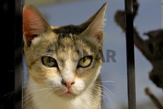 Portrait einer Katzenmutter
