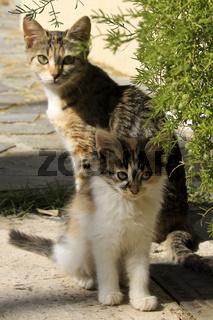 Katzenmama mit ihrem Jungen