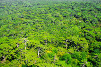 Aerial view of a green mountain forest