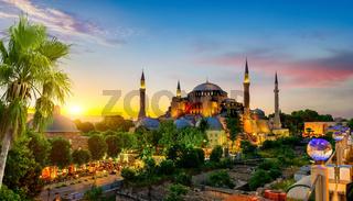 Hagia Sophia and palm tree