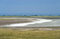 Pastures with salt efflorescence in the Langen Lacke lake area, Neusiedlersee, Austria