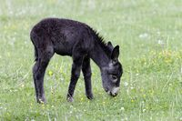 young donkey 3