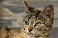 cat on the island of Kefalonia