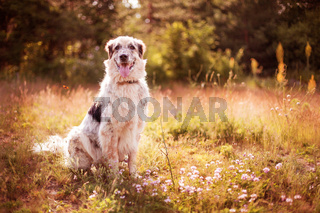 Big dog lying in pink flowers