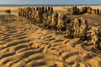 Structures in the sand of the Wadden sea at the co