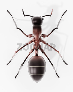 3D illustration of an ant. Top view. 3D illustration