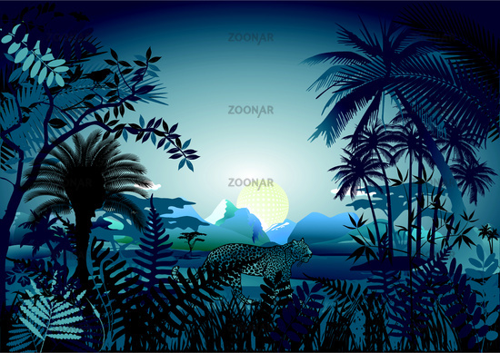 Night in the tropical rainforest