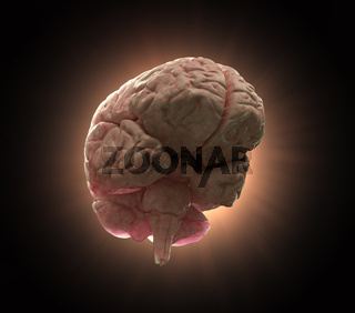 Human brain background illustration