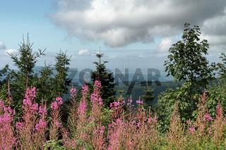 Landschaft im Nordschwarzwald
