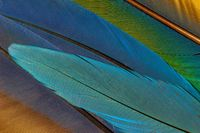 Detail of parrot feathers with bright colors.