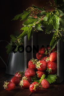 berries of ripe strawberries on a dark wooden background in a rustic style