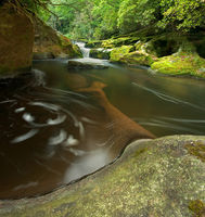 Dense Forest Waterfall