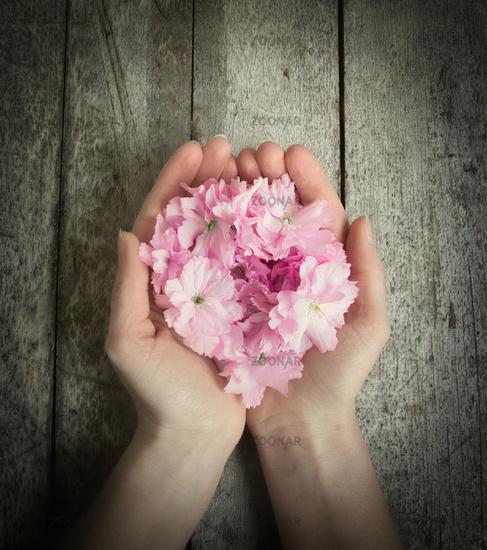 hands full of flowers