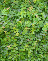 Small Green Leaves Pattern Background