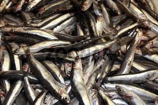 Fische am Fischmarkt