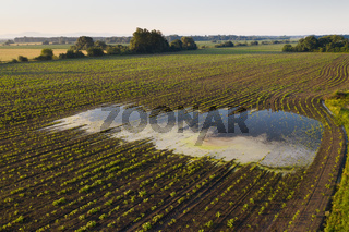 Rural scene with a flooded field in summer nature from drone.
