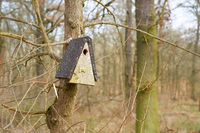 Nest box with the number 877 in the Biederitzer Busch, a forest area near Magdeburg in Germany