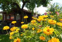 Sonnenblumen in Gartenkolonie