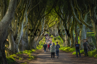 Tourists admiring iconic location from the TV show The Game of Thrones, The Dark Hedges