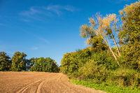 Landschaft mit Feld und Bäumen bei Hohen Demzin