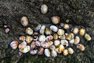 Muschelfelsen, La Guimorais, Bretagne, Frankreich