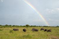Landscape of Queen Elizabeth National, Uganda