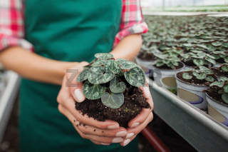 Garden center worker holding plant about to tbe potted