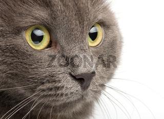 Close-up portrait  cat  on white