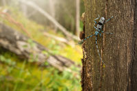Alpine longhorn beetle climbing on tree in sunlight