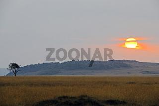 Sonnenaufgang ueber der  Masai Mara, Kenia, Afrika