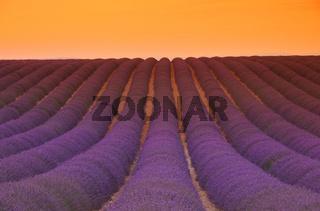 Lavendelfeld Sonnenuntergang - lavender field sunset 04