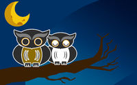 Owls on a brunch at night