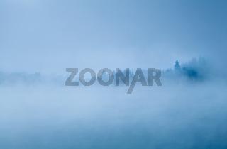 forest in morning fog