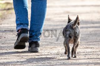 unterwegs mit dem Hund
