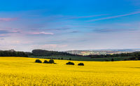Canola field in Hainich National Park, Thuringia, Germany