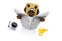 dog reading newspaper in the morning