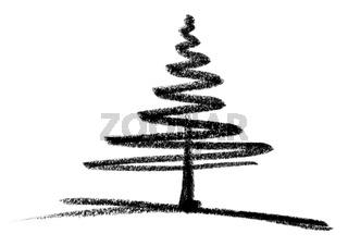 conifer sketch