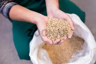 Midsection of worker examining barley at warehouse