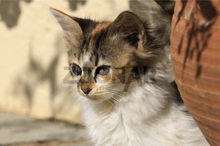 neugieriges Katzenkind