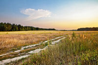 Sunset in summer field