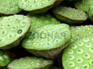 lotus seed pods